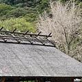 別府溫泉-海地獄 (100).jpg