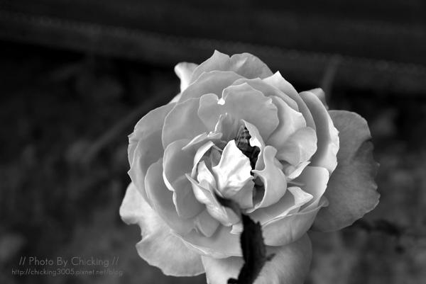 花朵裡有蜜蜂唷