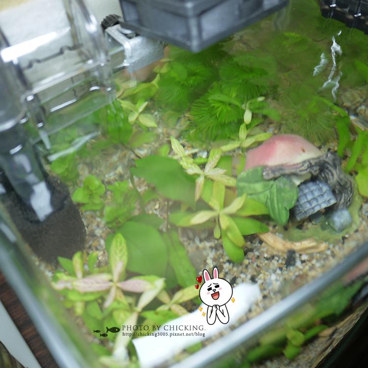 2012/8/6* 褐藻爆發