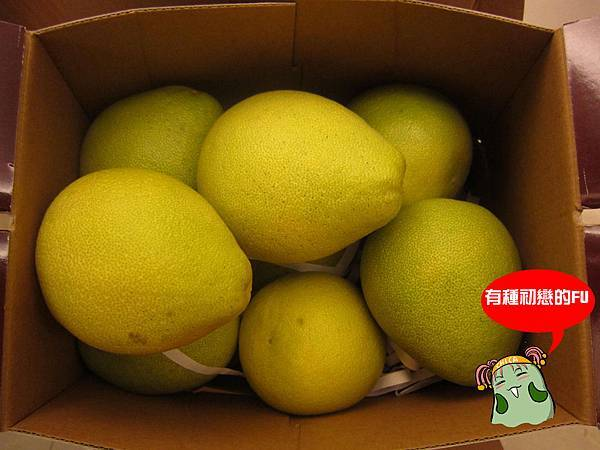 柚子體驗-5