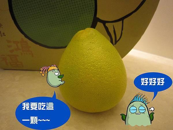 柚子體驗-7