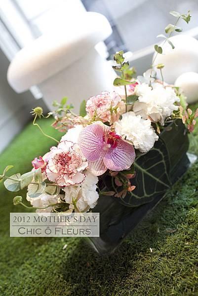 盆花A01