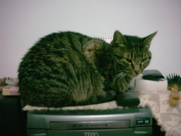 cat 006.jpg