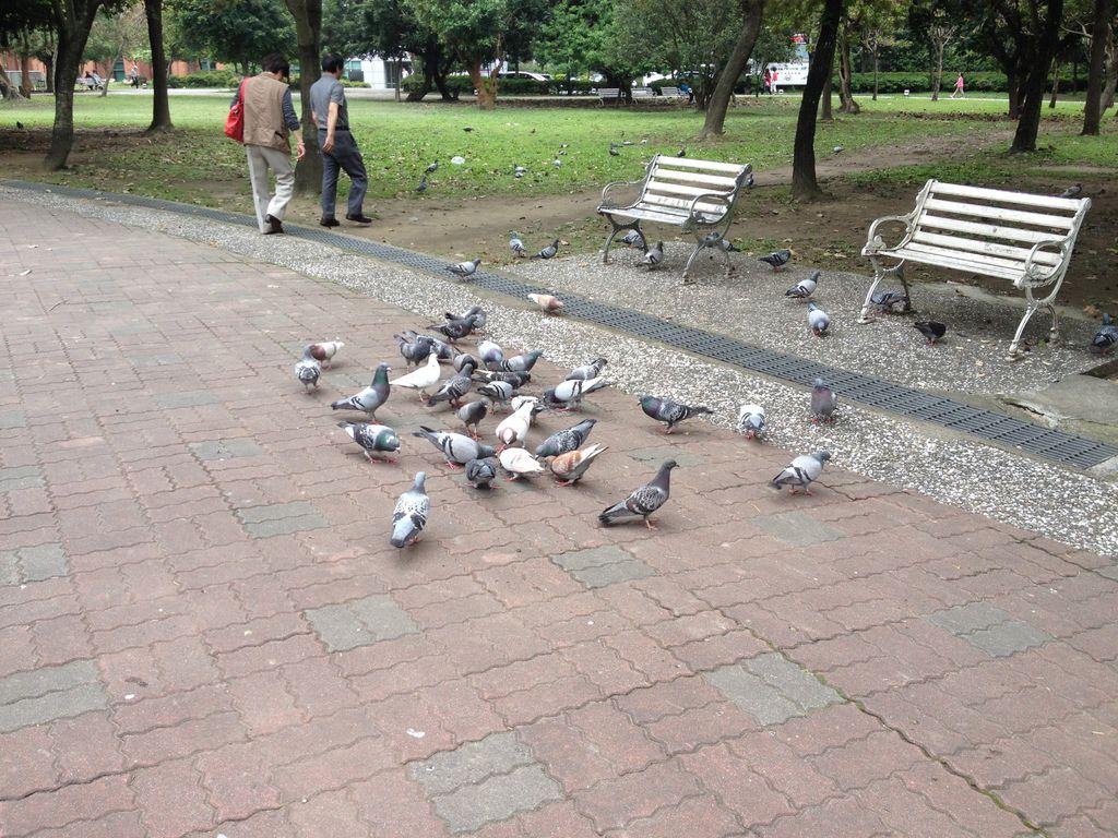 吃完了在4號公園散散步,感覺自己好像身輕如鴿了呢!