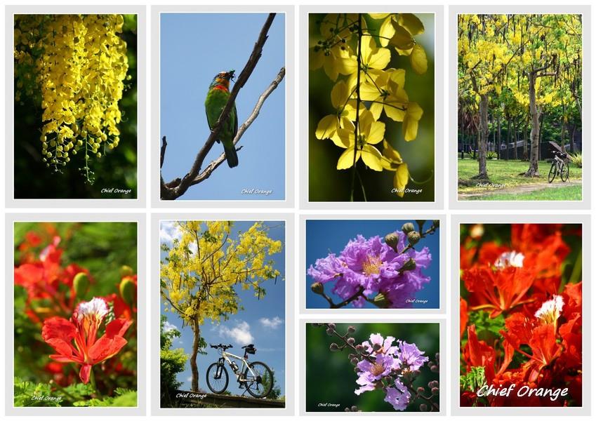 Flower s.jpg