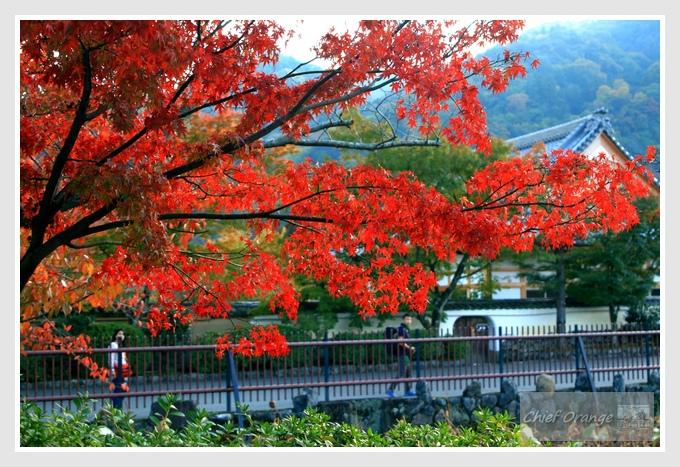 6 嵐山  (1).JPG