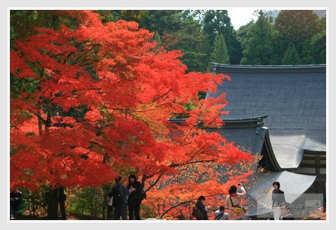 7 高雄山神護寺  (2).JPG