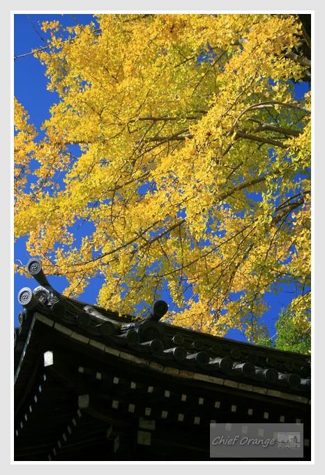 13 京都單車旅行  (1).JPG