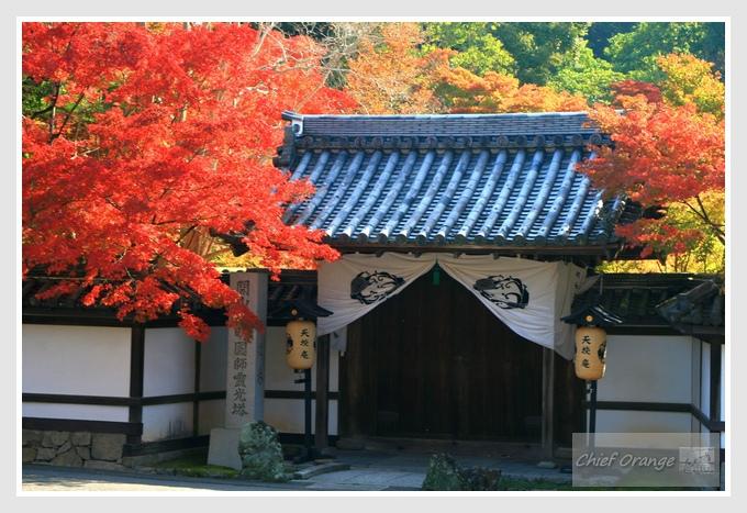 13 京都單車旅行  (2).JPG