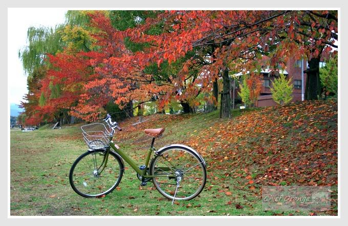 13 京都單車旅行  (3).JPG