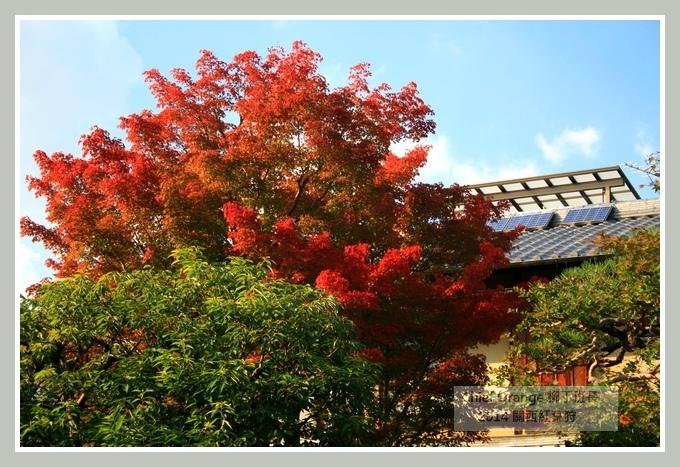 嵐山  (9).JPG
