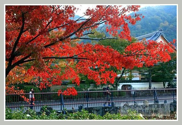 嵐山  (18).JPG