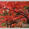 高雄山神護寺  (27).JPG