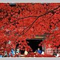 高雄山神護寺  (29).JPG