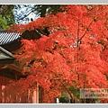 高雄山神護寺  (37).JPG