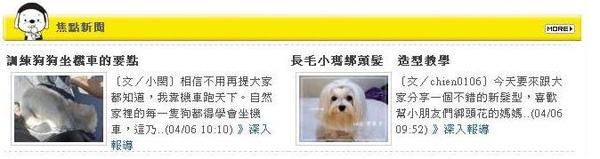 dognews-1.JPG