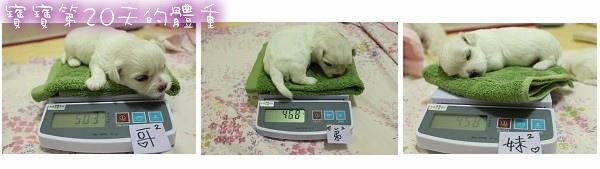 寶寶弟20天的體重.jpg