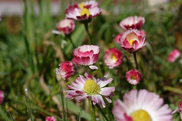 我覺得這種花也很漂亮