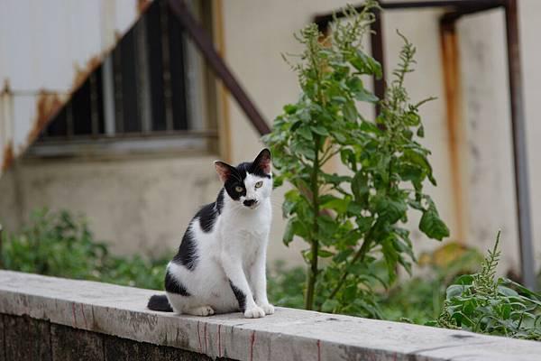 隨處可見小貓