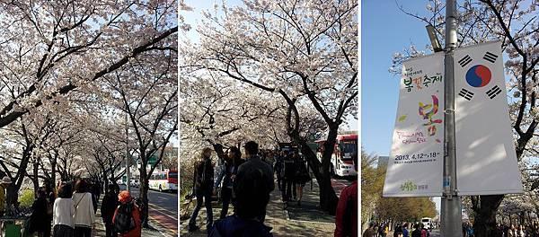cherry_blossom4