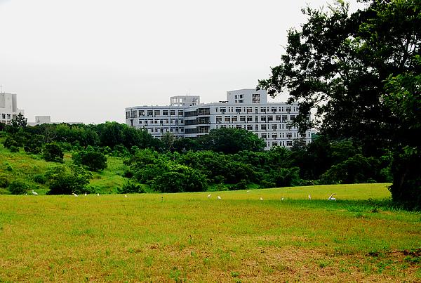 生醫大樓與生態.jpg