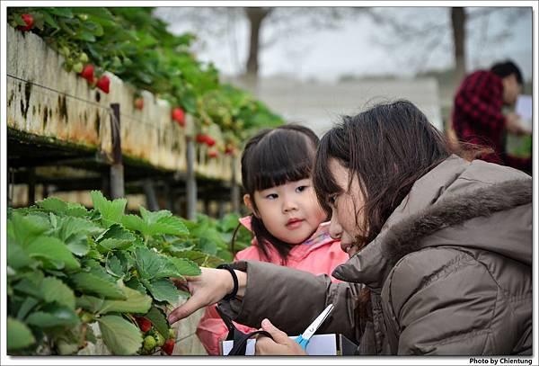 20130303-strawberry-07