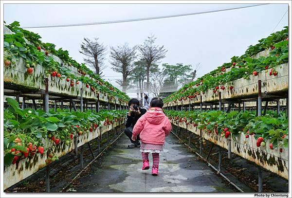 20130303-strawberry-14