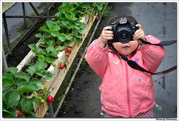 20130303-strawberry-20