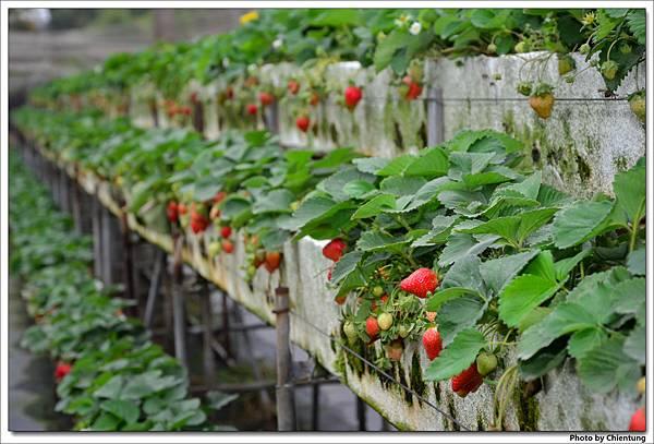 20130303-strawberry-03