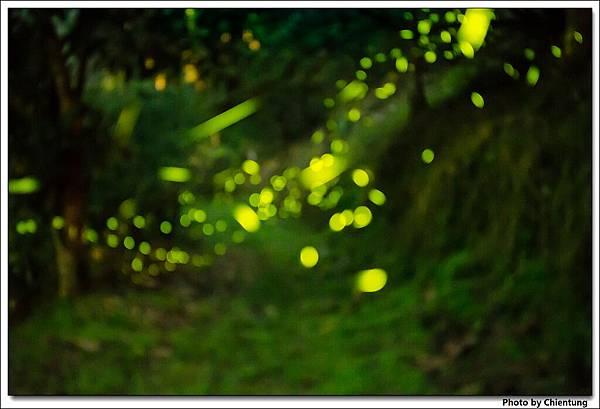 20130504-Firefly-21
