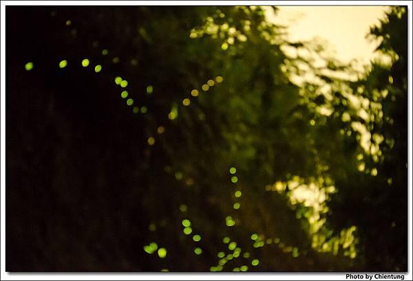 20130504-Firefly-23