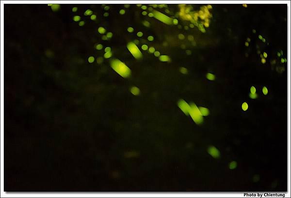 20130504-Firefly-24