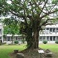 大榕樹.jpg