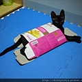 貓最愛紙箱.紙盒