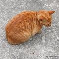 遇到的第三隻貓