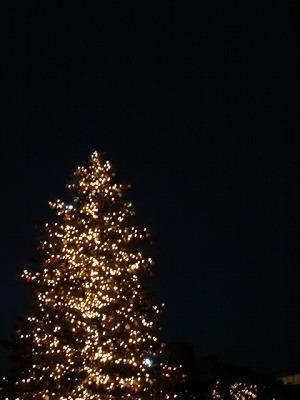 エビスの耶誕樹