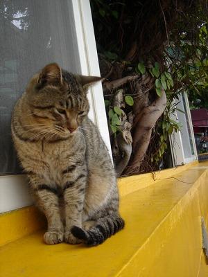 淡水的のら猫(野貓)