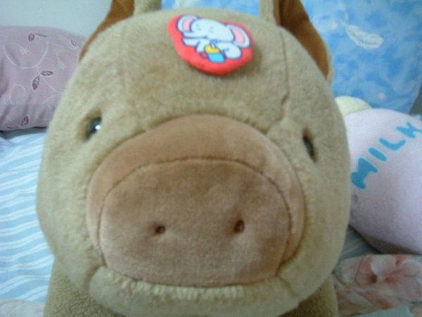 可愛山豬1