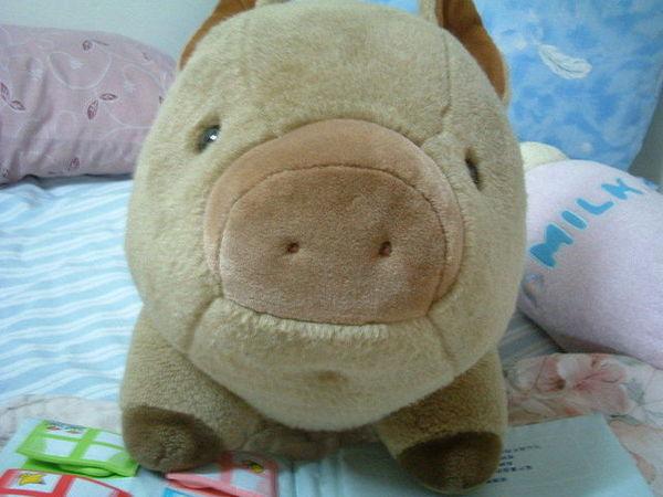 可愛山豬4