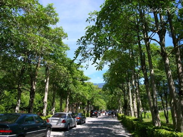 綠意盎然的樹林
