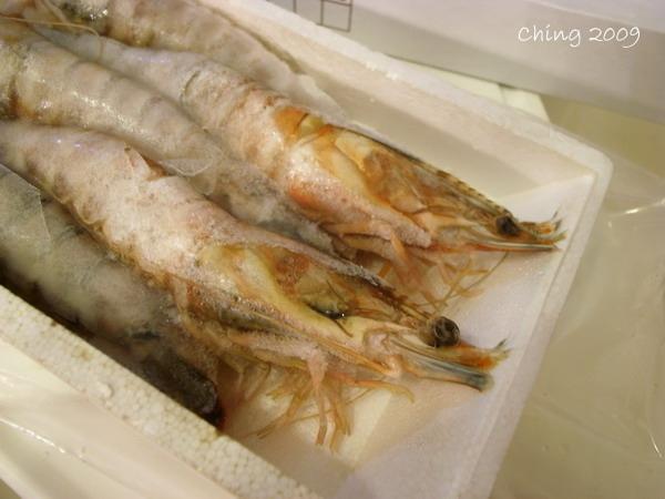 澎湖海大蝦