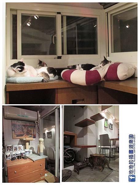貓咪起居室.jpg