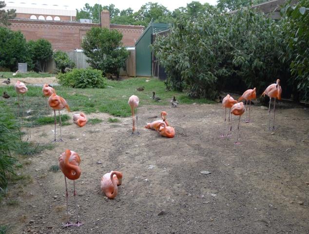 DC zoo- (15)