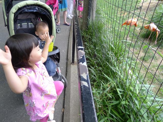 DC zoo- (16)