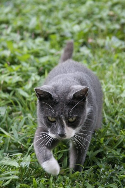 stray cat (1).jpg