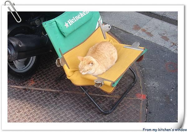 旗津的貓.jpg