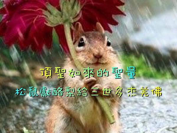 頂聖如來的聖量 松鼠獻酪梨給三世多杰羌佛.jpg