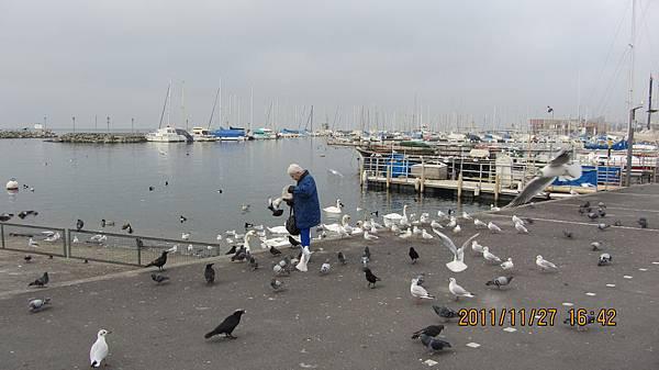 洛桑Ouchy港的老婦人與鳥