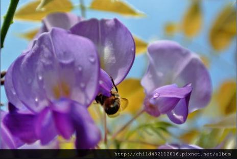 蜜蜂.png