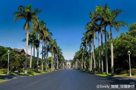 日山小聰明最愛的椰子樹